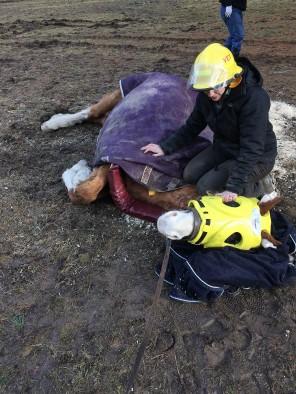 mare-rescue2